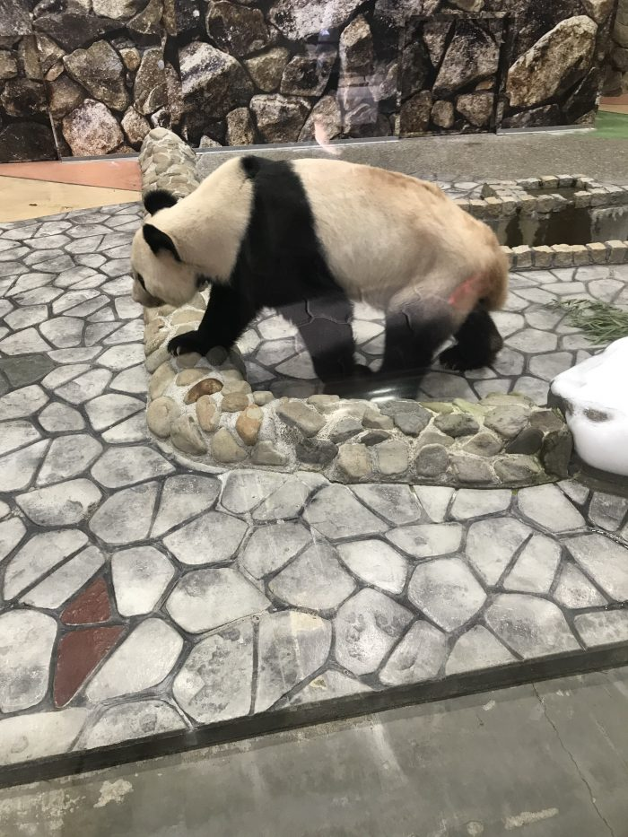 アドベンチャーワールド 白浜 パンダ